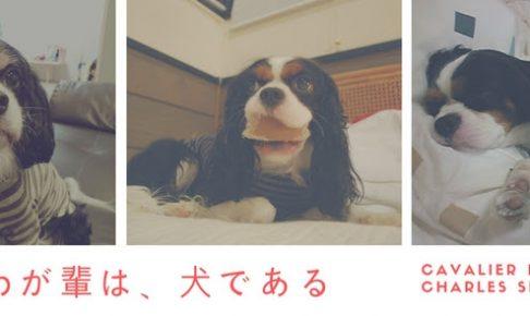 わが輩は、犬である