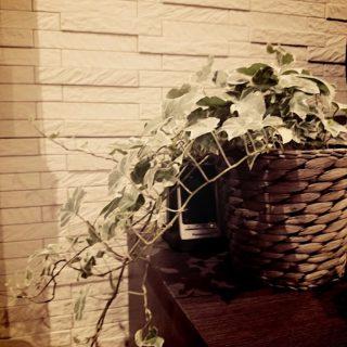 エコカラット-観葉植物